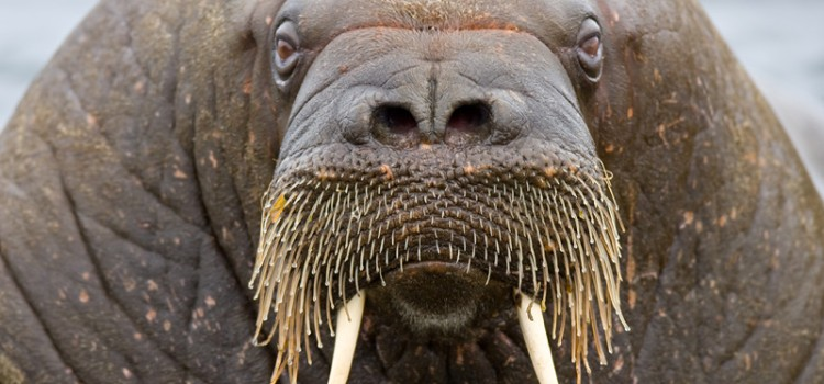 """""""The time has come,"""" the walrus said, """"to talk of many things"""""""