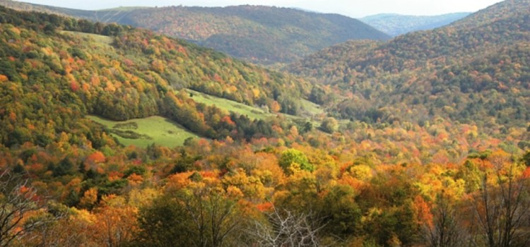 'Unbelievable, Terrible': Forest Service OKs Fracking in Largest National Forest on East Coast