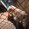 Brooks arrested for Animal Neglect II