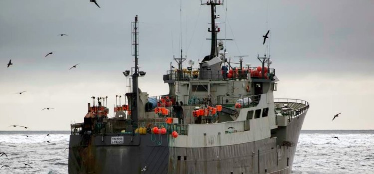 In 'Epic' Chase, Sea Shepherd Vows to Pursue Poachers to 'Ends of the Earth'