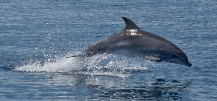 Scientists Conclusively Link BP Oil Spill with Unprecedented Dolphin Die-Off