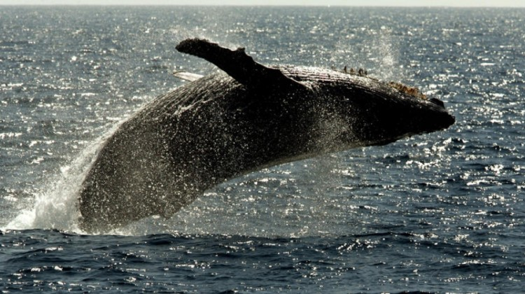 Marine Mammals Get Reprieve as US Navy Finally Agrees to Back Off Sonar Testing in Key Areas