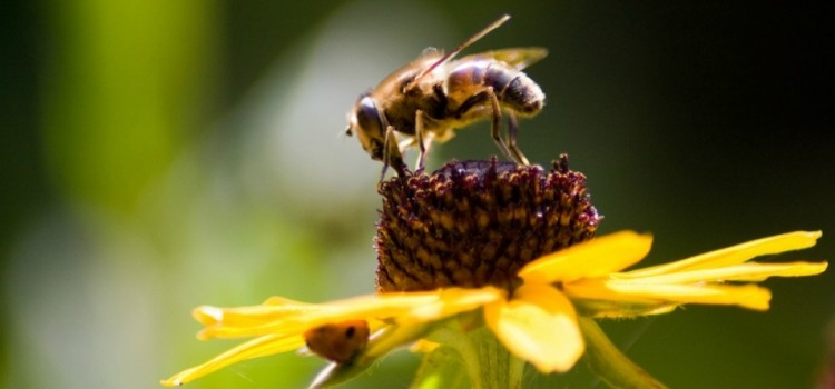 EPA Confirms Longstanding Fears About Impact of Neonics on Bees