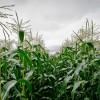 Organic Farmers Score New Victory in 'David and Goliath' GMO Fight