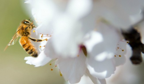 New Report Issues Dire Warning About Global Decline in Pollinators